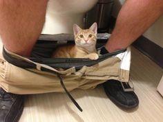 OMG ...... sooo cute kitty cat