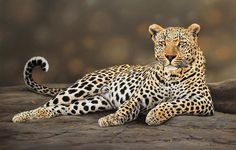 South African wildlife painter Leon Fouche creates hyper real paintings of animals Animals Images, Animals And Pets, Cute Animals, Animal Painter, Animal Paintings, Jaguar Animal, Cat Species, Tropical Animals, Mundo Animal