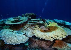 Hard Coral, Maldives, Sci Fi, Painting, Image, Art, The Maldives, Art Background, Science Fiction