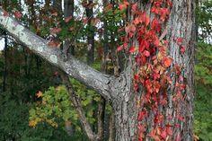 I love the East coast fall colors!!