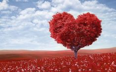 Valentine's Day is an annual festival to celebrate romantic love, friendship and admiration. Every year on 14 February. Brian Mcknight, Love Images, Love Pictures, Heart Images, Beautiful Images, Beautiful Flowers, Distance Love, Forest Plants, Fotografia Macro