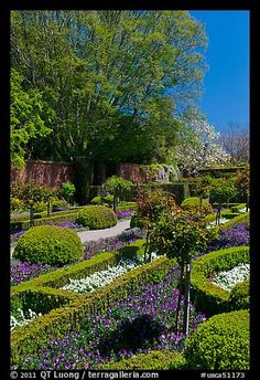 Hedges and flowers, walled garden, Filoli estate. Woodside, SF Bay area, California,