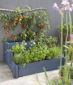 Potager escalier / Pieds de tomates suspendus