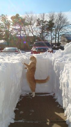 Who let the cat out in the winter?