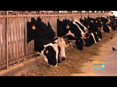 How much is a a Gallon of Milk? What does it take to get that gallon to your breakfast table? #milk #dairy #ag