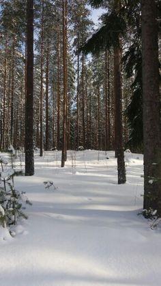 Metsä. Karstula