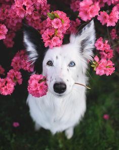 Cute Dogs And Puppies, I Love Dogs, Spotted Dog, Cutest Thing Ever, Dog Photography, Dog Quotes, Dog Pictures, Cat Paws, Cute Animals
