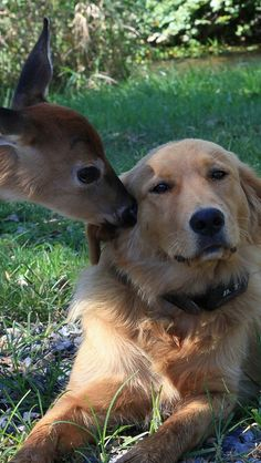 dog_deer_friendship_72047_640x1136 | Flickr - Photo Sharing!
