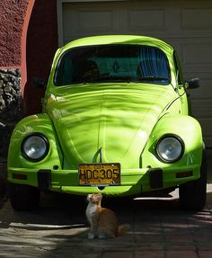 Cat & beetle