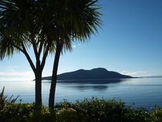 Palm trees, Lamlash, Isle of Arran