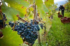 I migliori vini siciliani