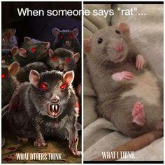 Love a rattie...i do!