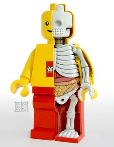 The Internal Anatomy Of A LEGO Minifig by patsy