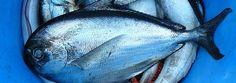 ¡Al rico pescado azul!