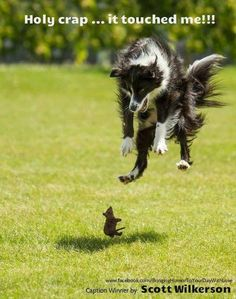 Funny dog picture -