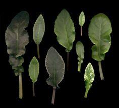a sampler of David Senk's longfolia