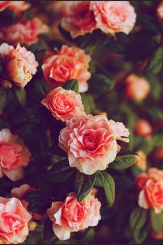 Pink flowers reaching towards the sun | Flowers