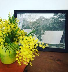 Une bonne odeur de mimosa dans la maison... #mimosa #var #fleurs