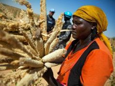 Unilever,Monsanto take over African land & agriculture - £600 million of UK aid money is going to help companies like Unilever and Monsanto take over African land and agriculture, writes Miriam Ross. The corporate power-grab will be disastrous for the small-scale farmers who feed at least 70% of Africa's people.
