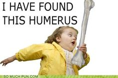 i have found this humerus