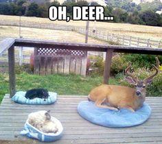 HEEHEEHEE thats REALLY funny!!!!!!!!!:):)