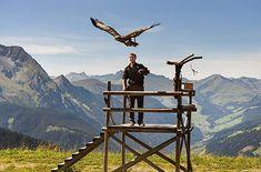 Greifvogelstation am Ahorn - Mayrhofen Berg, Mount Everest, Mountains, Nature, Travel, Europe, Mayrhofen, Bavaria Germany, Eagle