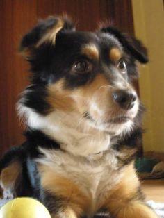 Es un perro mestizo de 7 años, le encontramos con menos de un mes en un contenedor de basura y desde entonces es el príncipe de la casa. Le encanta jugar, dormir en la cama con nosotros, ir al pueblo y sobre todo que le demos mimos. Para nosotros es el mejor perro y es uno mas de la familia, es el niño mimado.ANA SACIDO,