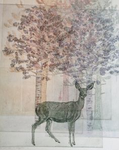 Black-Tailed Deer with Aspen and Lodgepole Pine Etching and Aquatint - by Julia Lucey