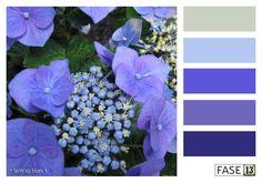 #blogpost #colourinspiration ~ Lacecap Blues ~ by #FASE13 ~ www.fase13.nl ~ Kleurinspiratie voor je interieur!