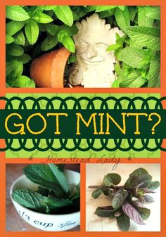 Got Mint? (Or Everything You'd Like to Know About Mint)