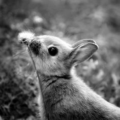 Attack of the... cuttest bunny ever :)