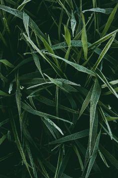 plant inspiration, beautiful plants, green, jungle plants, plant, leaves, green, minimalism, green minimalism