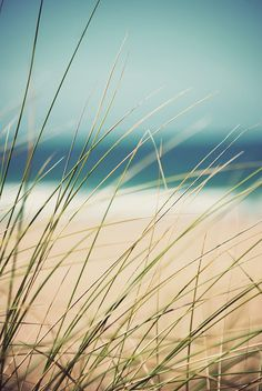 a lovely photo of beach grass, surf