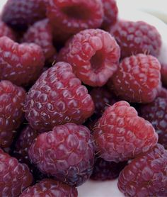 Raspberry 'Royalty' - Large to very large. Royalty is one of the largest red raspberries available. When ripe, it's soft purple in color, has a light fresh taste and is ideal for making an outstanding jam. High yielding and cold-hardy.