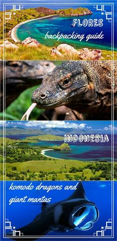 Complete backpacking guide to Flores island, Indonesia, plus day trip to Komodo/Rinca islands. Budget accommodation, transport, activities, scooter rental, places to eat and prices. Travel Komodo on a budget. How to see Komodo dragons.