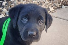 The 100 Most Important Puppy Photos Of All Time