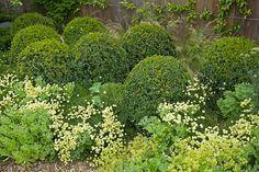 Border with clipped box, Santolina rosmarinifolia, Alchemilla mollis, achillea, sedums Large Garden   Charlotte Rowe Blog: