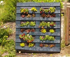 i am going to build us a vertical garden (out of a pallet) to put on our apartment patio