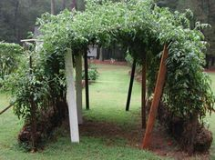 Straw Bale Urban Gardening ~ Ideas and Getting Started