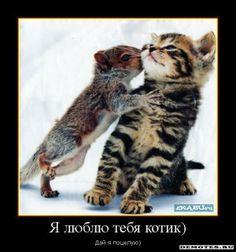 kotek i mysz
