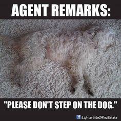 Please don't step on the dog ----> Real Estate Humor. www.findinghomesinhenderson.com Nevada Desert Realty