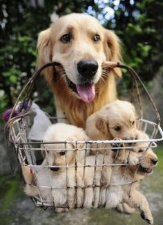 Basket of puppies :)
