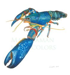 watercolor print of blue lobster by Manukaman on Etsy, $20.00