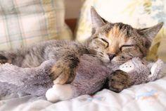 Got her a buddy to sleep with & keep her company.