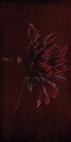 "Flowers In Neutral Moment-2 ""Dahlia Pinnata"" Archival pigment print Photo by Soichi Oshika"