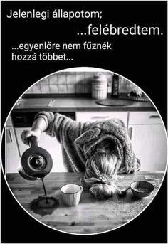 Good Day, Good Morning, Sarcasm, Haha, Jokes, Funny, Coffee, Humor, Buen Dia