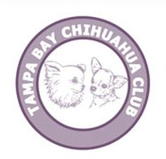 Small hobby breeder of AKC Chihuahuas, bred for good health, temperament, and show quality. Chihuahua Breeders, Chihuahuas, Create Website, Small Dogs, Destiny, Life Is Good, Little Dogs, Chihuahua Dogs, Chihuahua