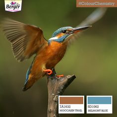 Go the king's way by painting your house a vibrant blue, offset with a muted shade of brown. Fish out the essence of nature and capture it for yourself! #ColourChemistry