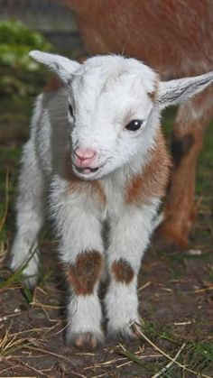 Cute Wild Animals, Baby Animals Pictures, Cute Little Animals, Animals Beautiful, Animals And Pets, Funny Animals, Farm Animals, Nature Animals, Cabras Animal