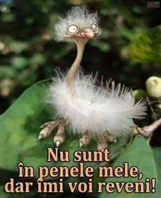Nu sunt in penele mele, dar imi voi reveni. Cellphone Wallpaper, Christina Aguilera, Animals And Pets, Breakup, Haha, Funny Pictures, Jokes, Smile, Paper Clay